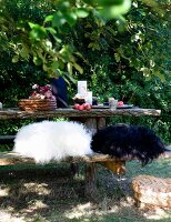 Black and white fur cushions on rustic bench at table set for breakfast