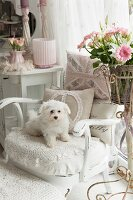 White dog sitting on vintage armchair with lacy blanket and romantic cushions next to vase of pink flowers