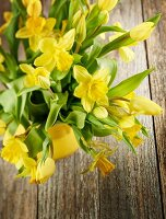 Yellow narcissus in ceramic pot on wooden surface