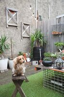 Small dog on old wooden bench in courtyard decorated with many potted plants and artificial grass rug