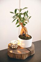Bonsai tree in bowl and tealight holder on slice of tree trunk