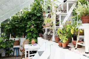 Potted flowering plants and vegetables in light-flooded greenhouse with climber-covered gable-end wall