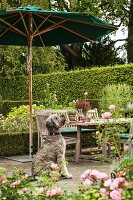 Dog sitting below parasol on terrace with garden table and chairs in background