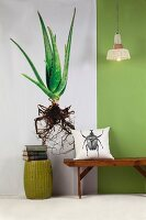 Photo of aloe vera plant, green wall and cushion with beetle motif on wooden bench