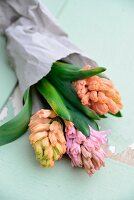Pastel hyacinths wrapped in paper on vintage surface
