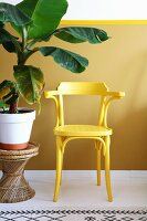Yellow armchair next to leafy houseplant on wicker stool against yellow wall