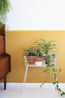 Houseplants in white wire plant stand against yellow wall