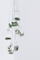 Leaves and fir twigs in suspended glass baubles