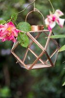 Small geometric lantern hung from rose bush