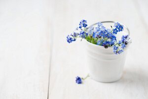 Forget-me-nots in small ceramic bucket
