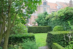 Precisely trimmed yew hedges and lawns in back garden