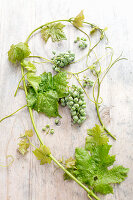Vine tendril with green grapes on wooden table