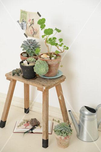 Green Living mit zarten Grüntönen, Recycling-Ideen und Natur-Stücken