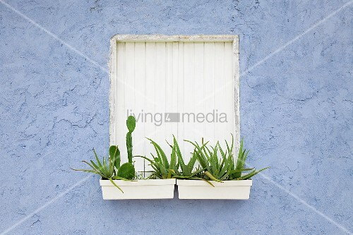 blumenk sten vor fensterladen bild kaufen living4media. Black Bedroom Furniture Sets. Home Design Ideas