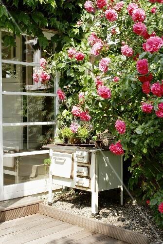 rosenstrauch und alter ofen auf einer terrasse bild kaufen living4media. Black Bedroom Furniture Sets. Home Design Ideas