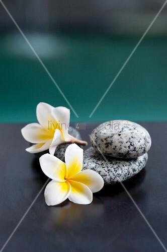 zwei frangipani bl ten und graue steine bild kaufen living4media. Black Bedroom Furniture Sets. Home Design Ideas