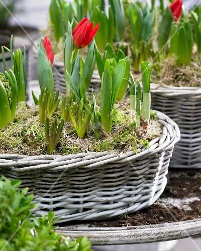 verschiedene fr hlingsblumen in k rben auf einem terrassentisch bild kaufen living4media. Black Bedroom Furniture Sets. Home Design Ideas
