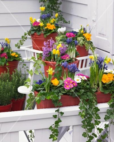 bunte fr hlingsblumen auf der terrasse bild kaufen living4media. Black Bedroom Furniture Sets. Home Design Ideas