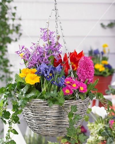 blumenampel mit verschiedenen fr hlingsblumen auf der terrasse bild kaufen living4media. Black Bedroom Furniture Sets. Home Design Ideas