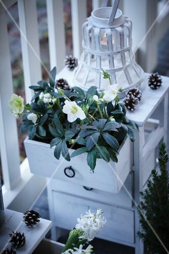 Schubladenkommode mit schneerosen und windlicht auf der for Windlicht terrasse