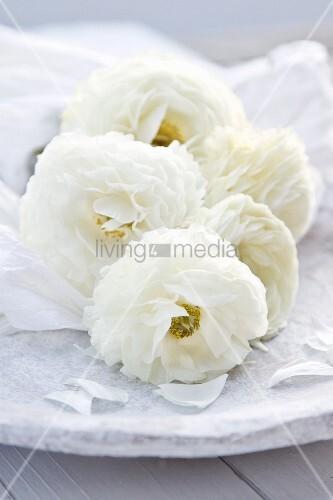 weisse rosen mit seidenpapier auf steinteller bild kaufen living4media. Black Bedroom Furniture Sets. Home Design Ideas