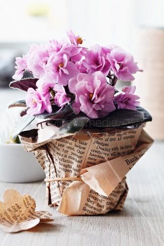 blumentopf mit manschette aus zeitungspapier bild kaufen living4media. Black Bedroom Furniture Sets. Home Design Ideas