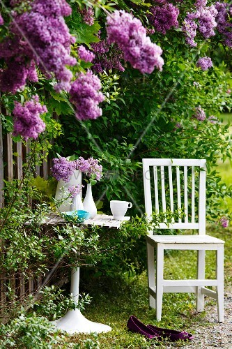 weisser gartenstuhl und tisch am fliederbusch living4media. Black Bedroom Furniture Sets. Home Design Ideas