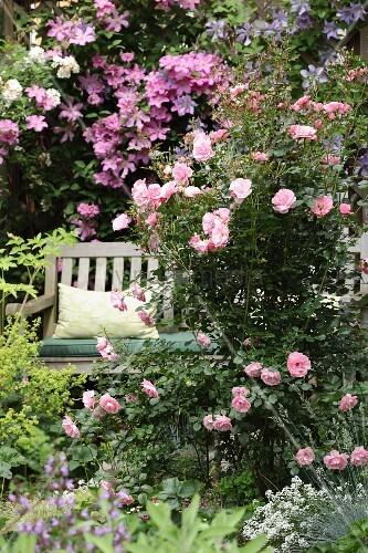 lauschiges pl tzchen zwischen pink bl henden rosen bild kaufen living4media. Black Bedroom Furniture Sets. Home Design Ideas