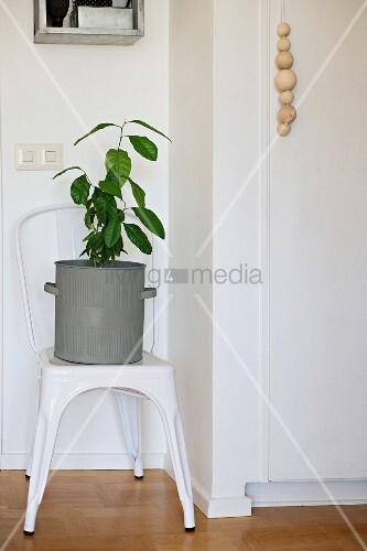 gr ne zimmerpflanze in zinktopf auf einem vintage stuhl daneben kordel mit holzkugeln als griff. Black Bedroom Furniture Sets. Home Design Ideas