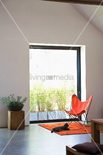 butterfly sessel und katze auf orangefarbenem teppich vor. Black Bedroom Furniture Sets. Home Design Ideas