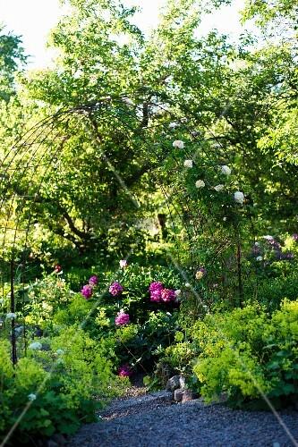 rosenbogen pfingstrosen und bl hendem frauenmantel bild. Black Bedroom Furniture Sets. Home Design Ideas