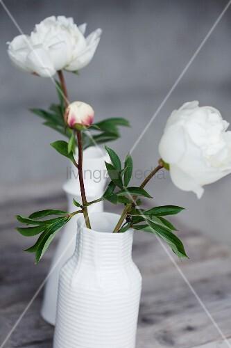 weisse pfingstrosen in einer vase auf holztisch bild kaufen living4media. Black Bedroom Furniture Sets. Home Design Ideas