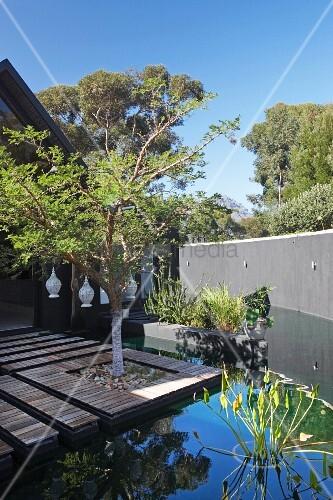 holzterrasse mit eingepflanztem baum in teich integriert im garten mit hoher mauer bild. Black Bedroom Furniture Sets. Home Design Ideas