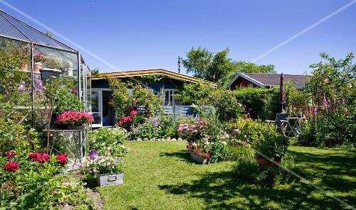 gew chshaus und skandinavische sommerh user in bl hendem garten mit blauem himmel bild kaufen. Black Bedroom Furniture Sets. Home Design Ideas