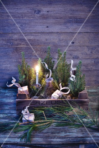A mini Christmas forest in an old wooden crate