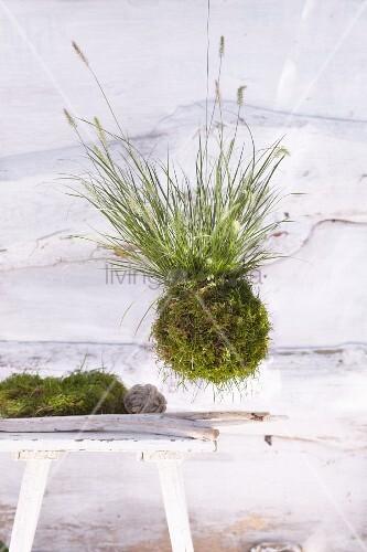 Hängende Pflanzenkugel aus Moos und Pfeifenputzergras
