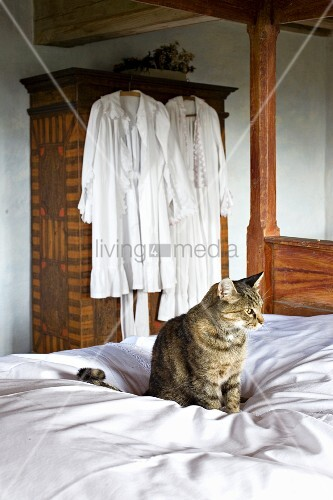 katze auf weisser bettdecke im hintergrund weisse nachtkleidung an schrank geh ngt bild. Black Bedroom Furniture Sets. Home Design Ideas