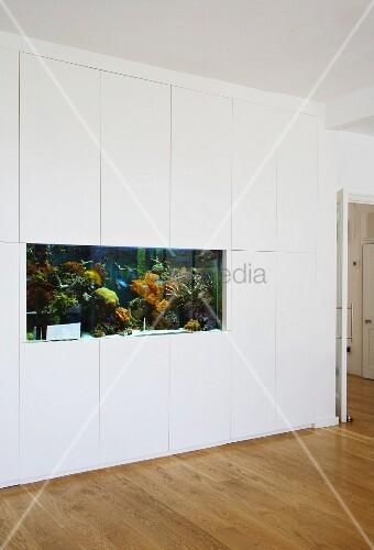 eingebautes aquarium