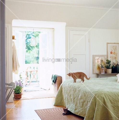 katzen unter und auf dem bett im traditionellen schlafzimmer bild kaufen living4media. Black Bedroom Furniture Sets. Home Design Ideas