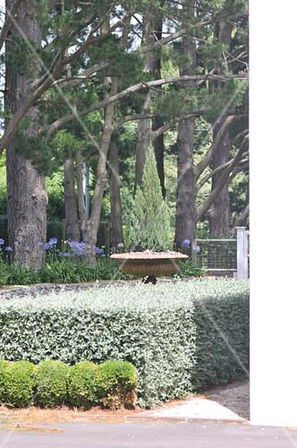 niedrige buschreihe vor formgeschnittener hecke und b ume im garten bild kaufen living4media. Black Bedroom Furniture Sets. Home Design Ideas