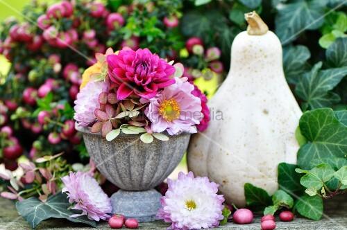 herbstdeko mit dahlien astern hortensien k rbis efeu und beeren bild kaufen living4media. Black Bedroom Furniture Sets. Home Design Ideas