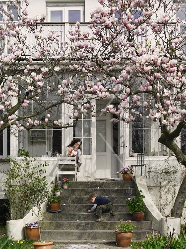 bl hender magnolienbaum vor villa und spielendes kind auf. Black Bedroom Furniture Sets. Home Design Ideas