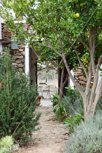 mediterrane obstb ume am gartenweg und blick durch offene t ren eines wohnhauses auf gartentisch. Black Bedroom Furniture Sets. Home Design Ideas