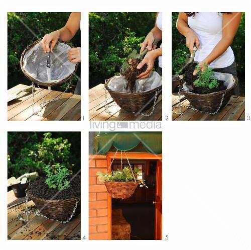 gartenarbeit blumen in aufgeh ngtem korb einpflanzen bild kaufen living4media. Black Bedroom Furniture Sets. Home Design Ideas
