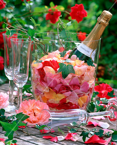 sektk hler mit rosa rosenbl tenbl ttern bild kaufen living4media. Black Bedroom Furniture Sets. Home Design Ideas