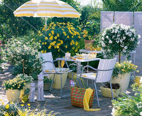 euryops gelbe margerite bild kaufen living4media. Black Bedroom Furniture Sets. Home Design Ideas
