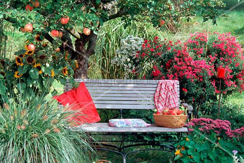 bank im garten unter apfelbaum james grieve bild. Black Bedroom Furniture Sets. Home Design Ideas