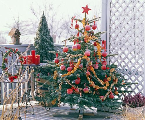 picea fichte als weihnachtsbaum dekoriert mit malus. Black Bedroom Furniture Sets. Home Design Ideas