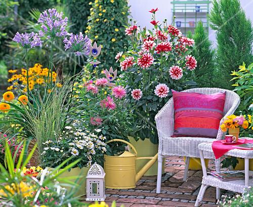 terrasse mit dahlien schmucklilie und korbm beln bild. Black Bedroom Furniture Sets. Home Design Ideas