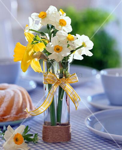 Narcissus narzissen in schmaler hoher glasvase mit for Schmaler hoher beistelltisch